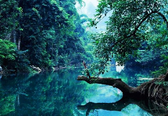 国内最美十大原始森林