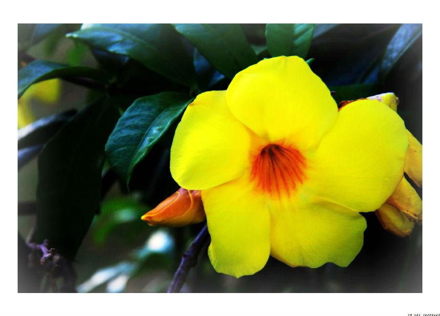 那里生长着各种各样的鲜花