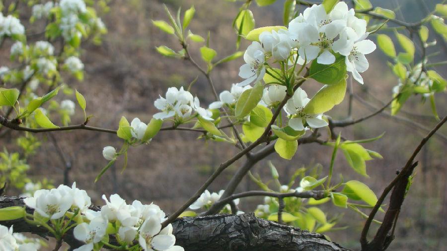 春天的足迹(散文)