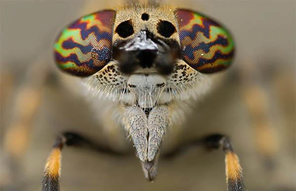 动物头像微距特写摄影