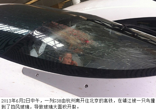 刘植荣:飞鸟撞停高铁,这是一只什么鸟?