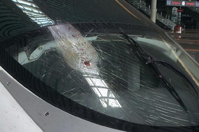 刘植荣:飞鸟撞停高铁,这是一只什么鸟? - 刘植荣 - 刘植荣的博客