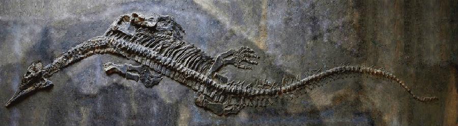 蛟龙图片真实 汶川地震阴兵借道 世界上最大的蛇500米 蛟龙被捕杀图片