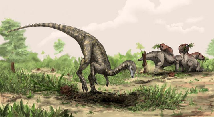 胡德良 译 一个古生物学研究小组认为:他们发现了最早的已知恐龙——一种生活在2.43亿年前的动物,体型比拉布拉多猎狗还要小。这比已知的最古老恐龙还要早至少1000万年,可能会改变研究人员对恐龙进化方式的看法。但是,一些科学家,包括研究论文的作者们,警告说:那些化石也可能代表着恐龙的近亲。 跟踪研究最早的恐龙并不是一件容易事,那么古老的化石通常是支离破碎的,而且研究人员通常对它们的进化谱系持有不同的观点。然而,古生物学家们的确一致认为:在阿根廷发现的小型标本可以追溯到2.