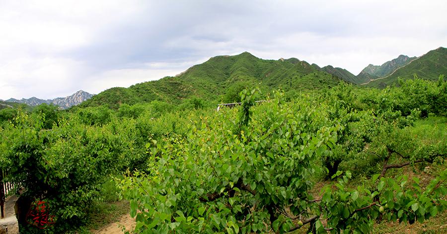 山里的风景(三)