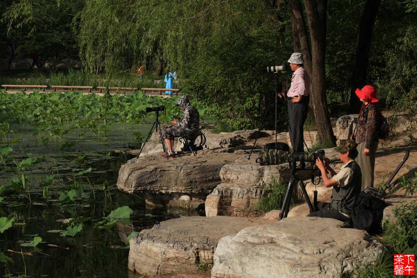 夏日北京玉渊潭掠影 - 下午茶馨 - 下午茶馨展示页