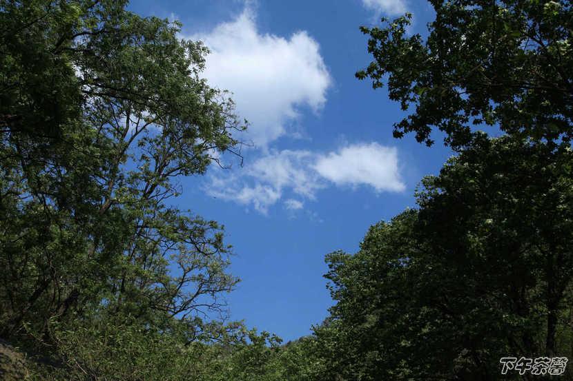 在北纬40度坐标前欣赏初夏的滋味 - 下午茶馨 - 下午茶馨展示页