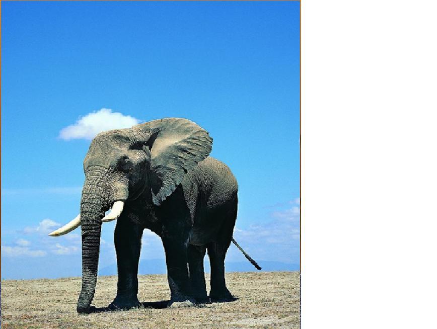 大象 动物 868_654