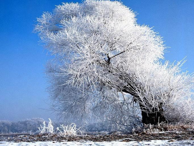 冬之路 - 白雪 - 雪之吻