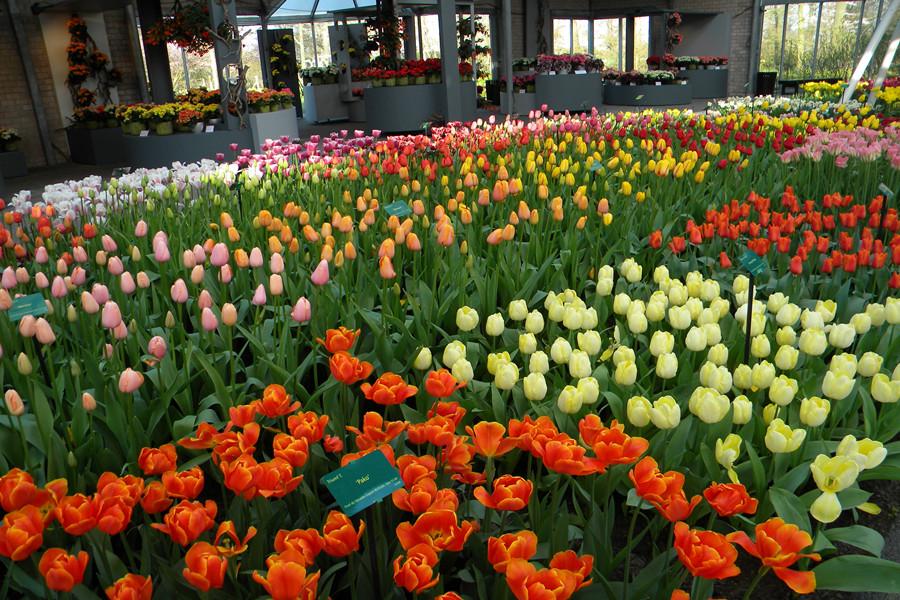 欧洲最美丽的春季花园 - H哥 - H哥的博客