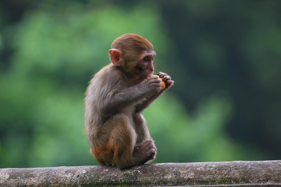 灵性十足的黔灵山猕猴 - 国防绿 - ★☆★国防绿JL★☆★