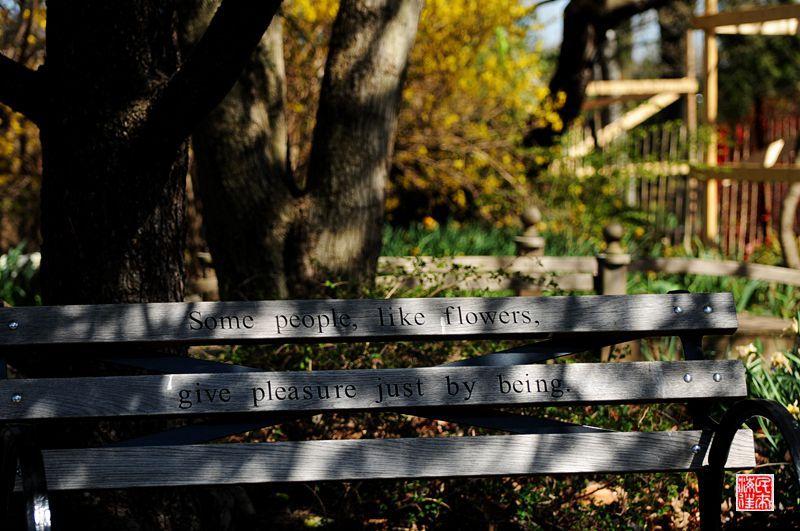 美国散记:植物园邂逅超萌小松鼠 - H哥 - H哥的博客