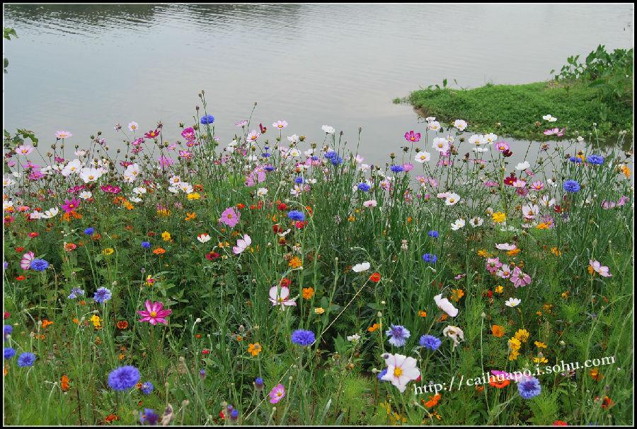 公园的特色是原生态:水,树,草,当然,这其中少不了原住民小动物们咯.