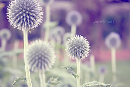 花儿的季节