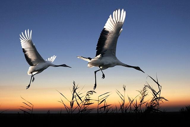让迷失的小鸟找到爱巢(原创小说) - 泉水叮咚 - 泉水叮咚
