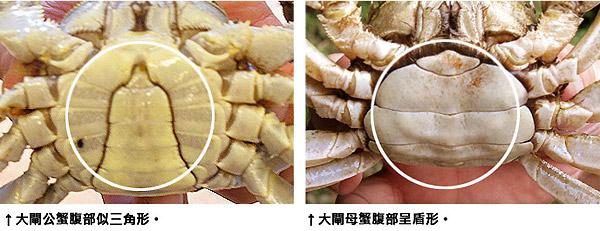 螃蟹怎么分辨公母_海马怎么分公母