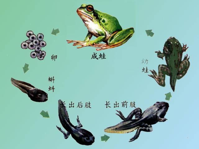 在动物的运动过程中,提供动力的结构是(  )A.骨B.关节C.骨骼肌D.神(图2)  在动物的运动过程中,提供动力的结构是(  )A.骨B.关节C.骨骼肌D.神(图4)  在动物的运动过程中,提供动力的结构是(  )A.骨B.关节C.骨骼肌D.神(图6)  在动物的运动过程中,提供动力的结构是(  )A.骨B.关节C.骨骼肌D.神(图9)  在动物的运动过程中,提供动力的结构是(  )A.骨B.关节C.骨骼肌D.神(图12)  在动物的运动过程中,提供动力的结构是(  )A.骨B.关节C.骨骼肌D.神(