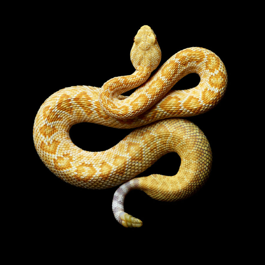 蛇的画法步骤