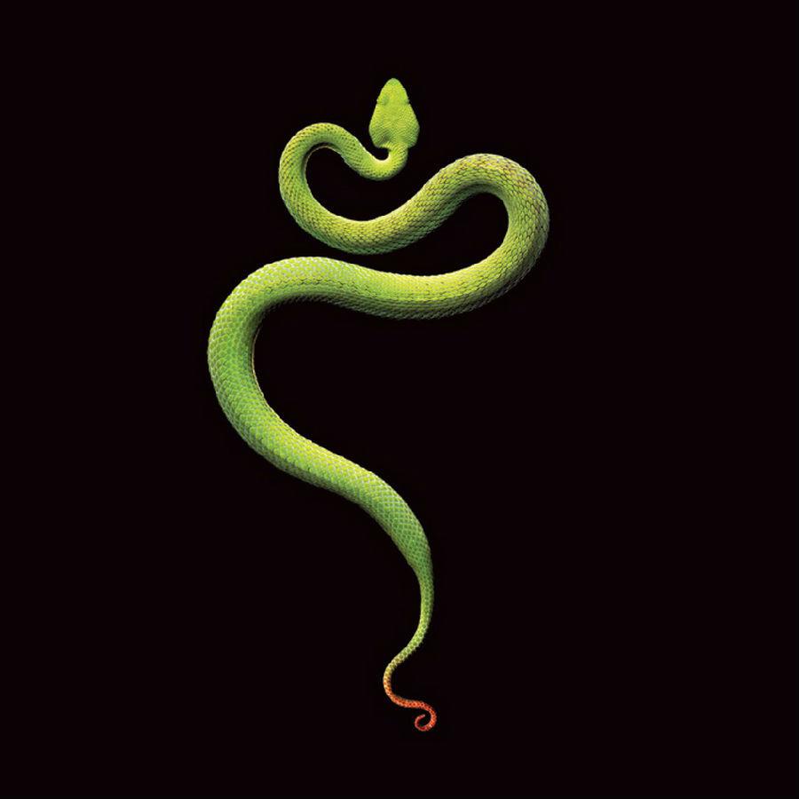 动物 蛇 设计 矢量 矢量图 素材 900_900