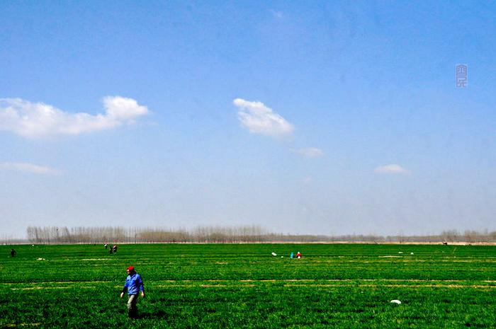 春走黄河 - 古藤新枝 - 古藤的博客