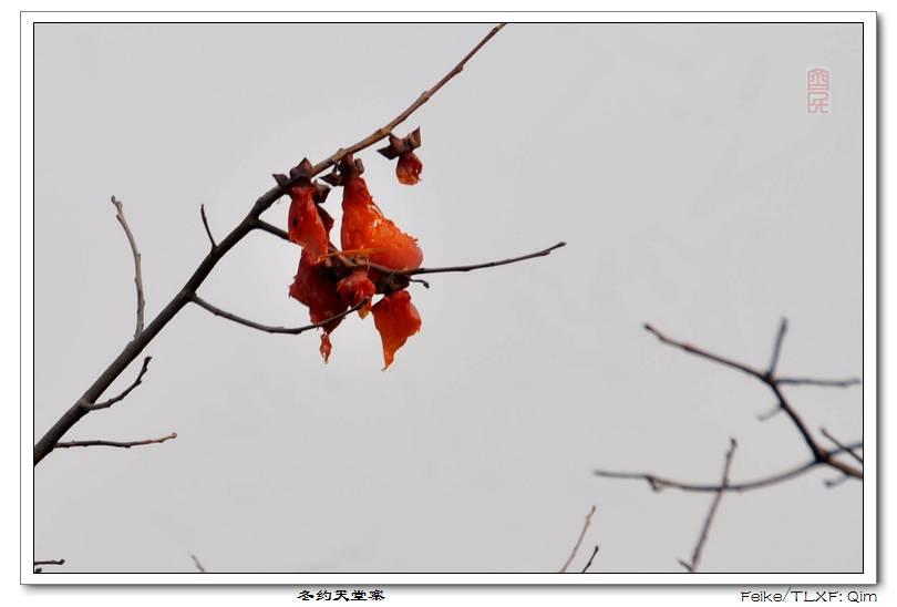 冬约天堂寨 - 古藤新枝 - 古藤的博客