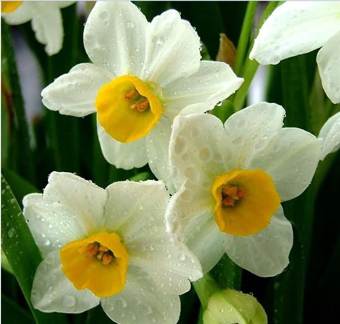 最香的花_世界上最香的花是什么花 悟空问答