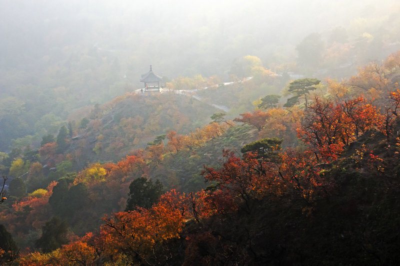 金秋香山红叶好,漫坡炫彩胜春花 - 侠义客 - 伊大成 的博客