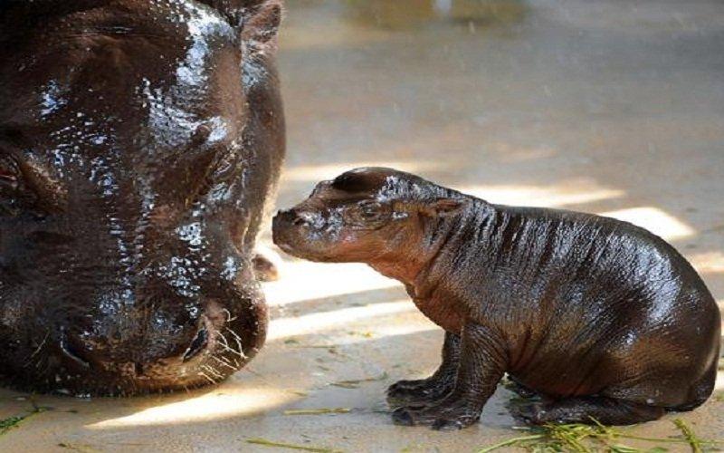 濒危动物中最可爱的十大物种(组图)_月亮飞船_新浪博客