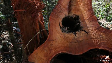 食亚马逊原始森林
