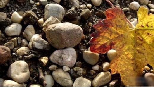 葡萄藤最理想的生长土壤,只需要少部分的营养,但排水性要好,可以储存