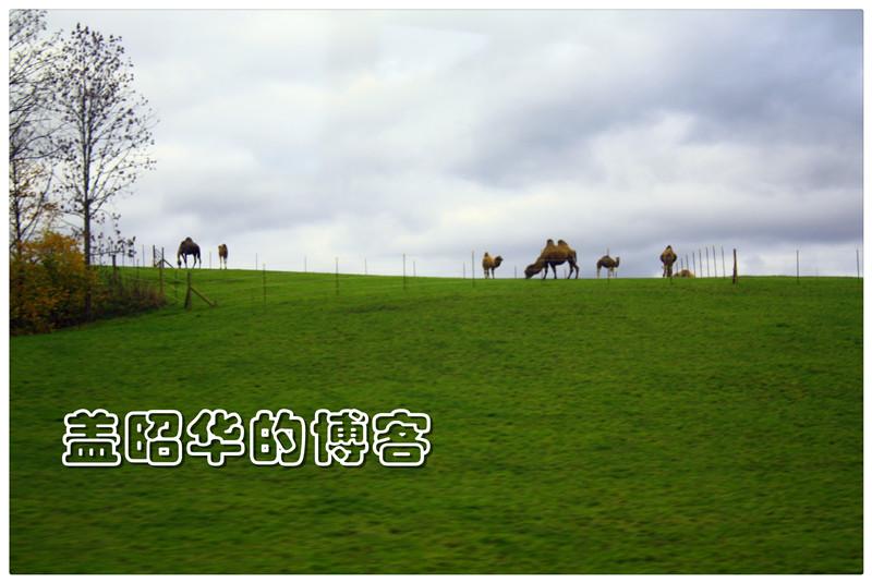 新天鹅堡下的幸福农民 - 盖昭华 - 盖昭华的博客