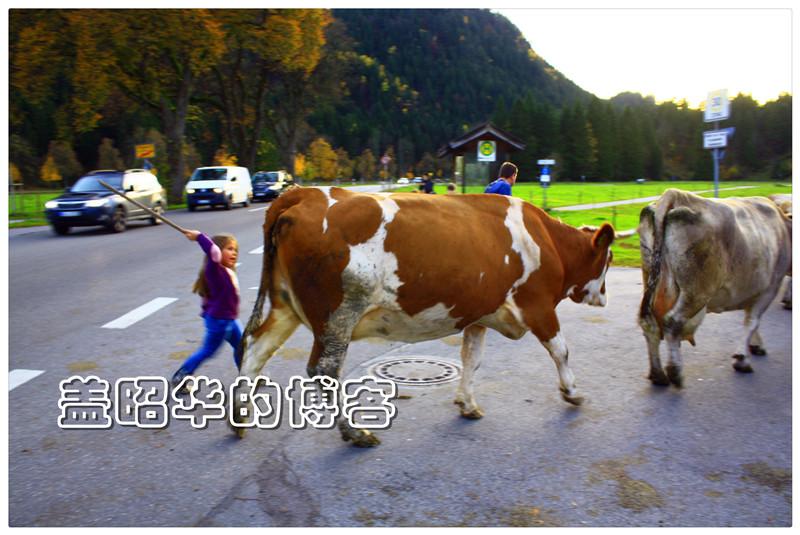 盖韶华:新天鹅堡下的幸福农民 - dengjianfu2356 - dengjianfu2356的博客