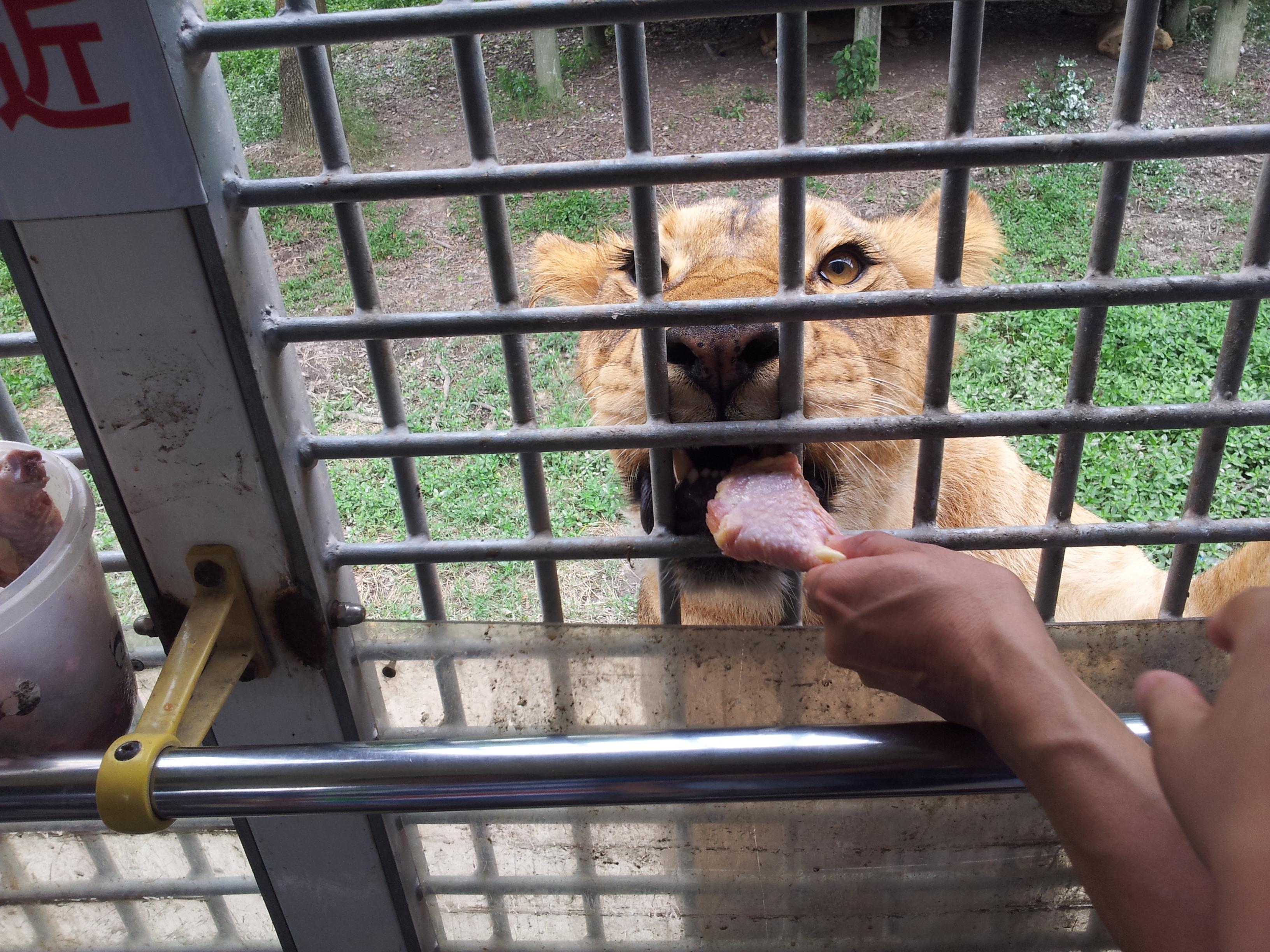 上海野生动物园中最有趣的要