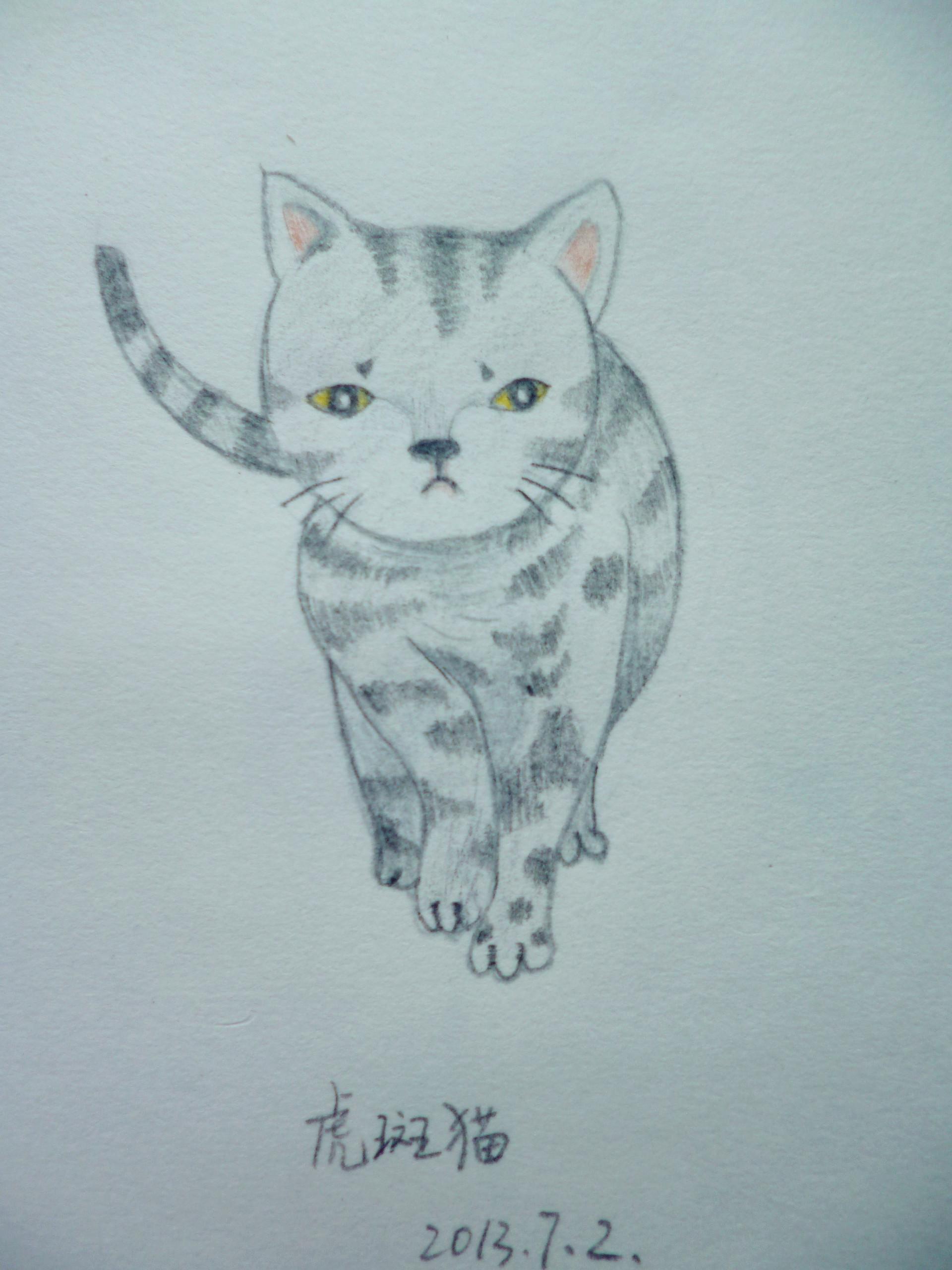 可爱小猫素描彩铅画法步骤