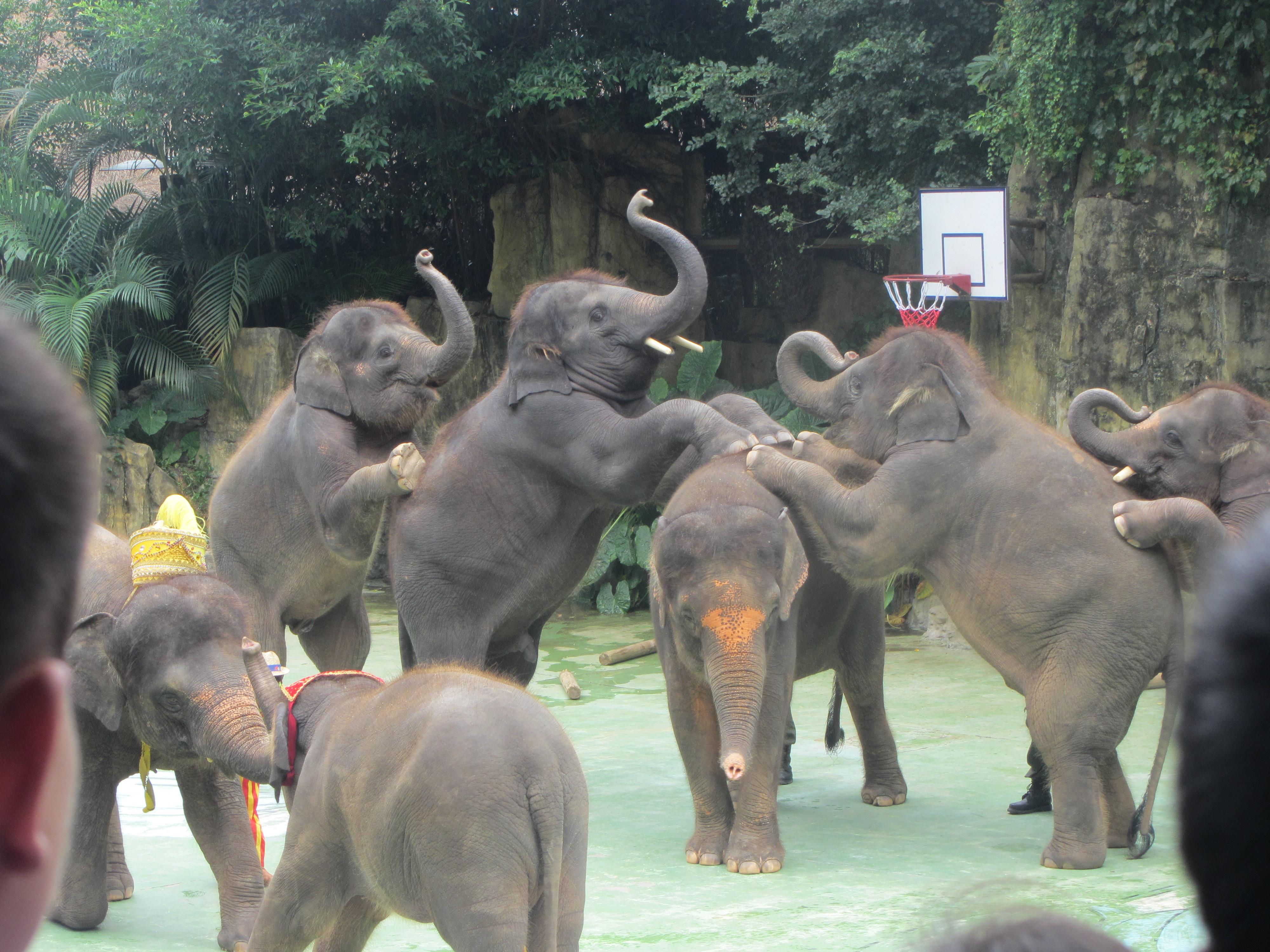 游 广东长隆香江野生动物园