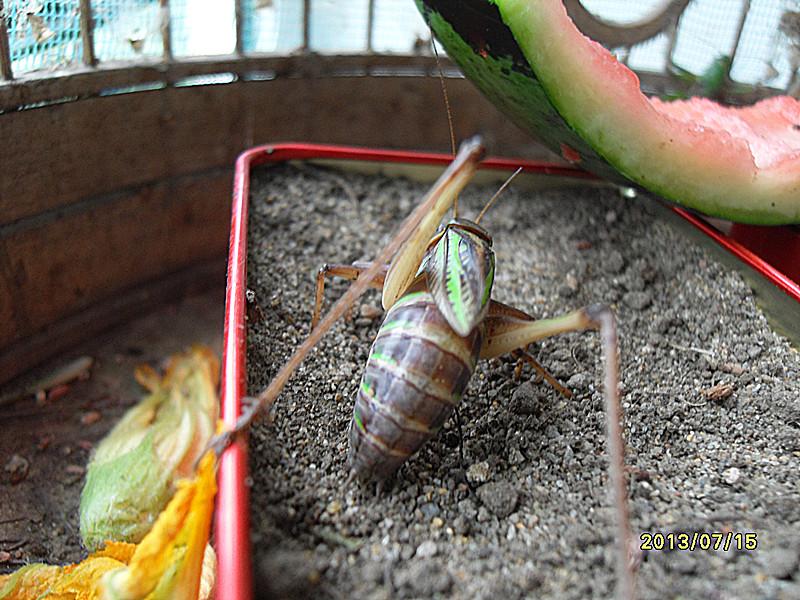 产卵繁殖的动物照片