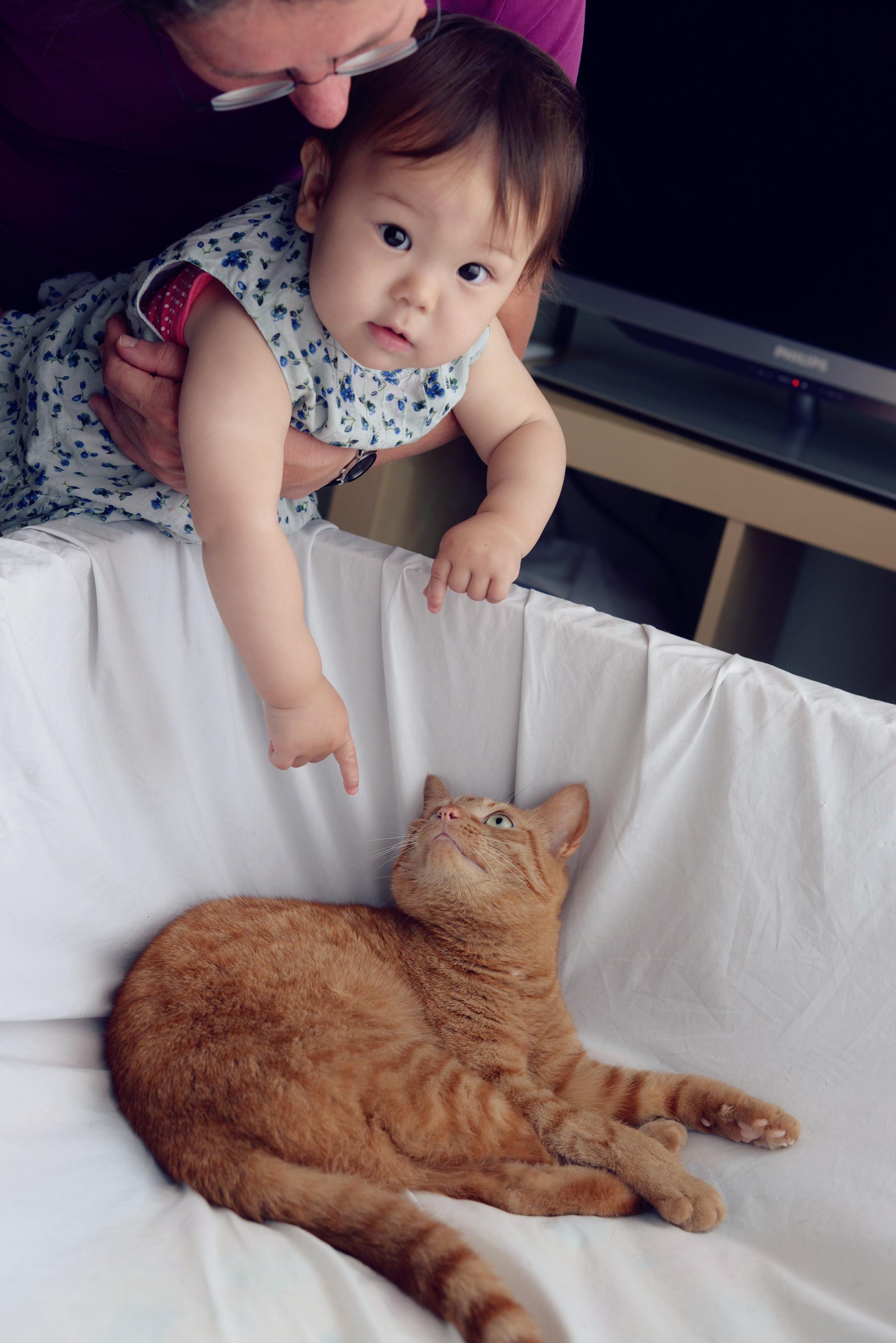 对大人们来说这对儿双胞胎新生儿是焦点,对我来说还是小猫咪最好玩儿.