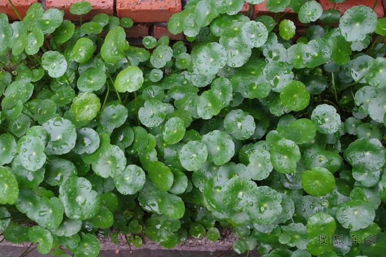 背景 壁纸 绿色 绿叶 树叶 植物 桌面 780_520图片