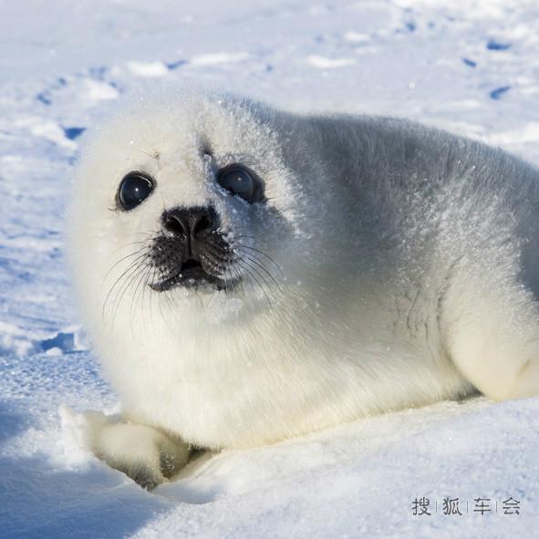 刚出生的小动物冬图片