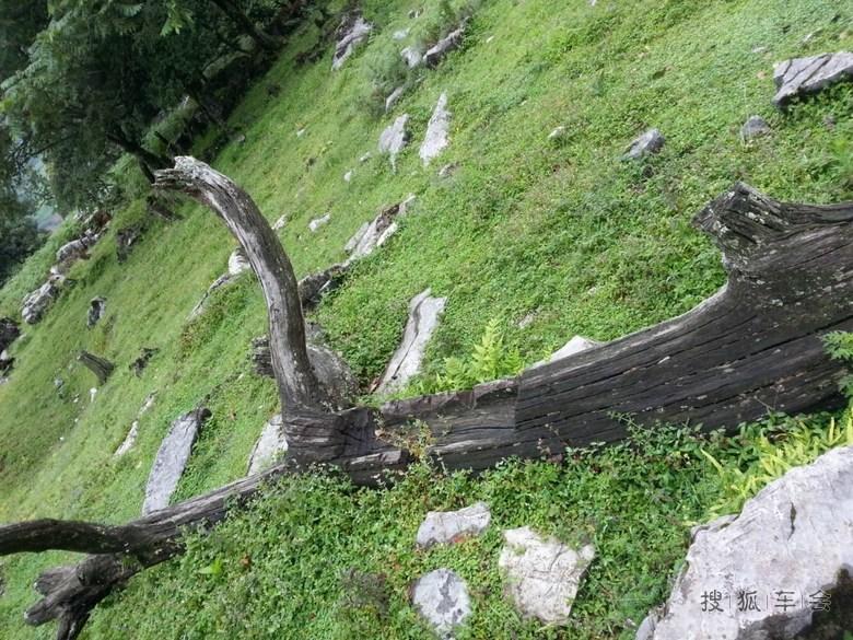 公园介绍有古代人类的部落遗址,硬是没找到只找到一颗被凿过的枯树杆