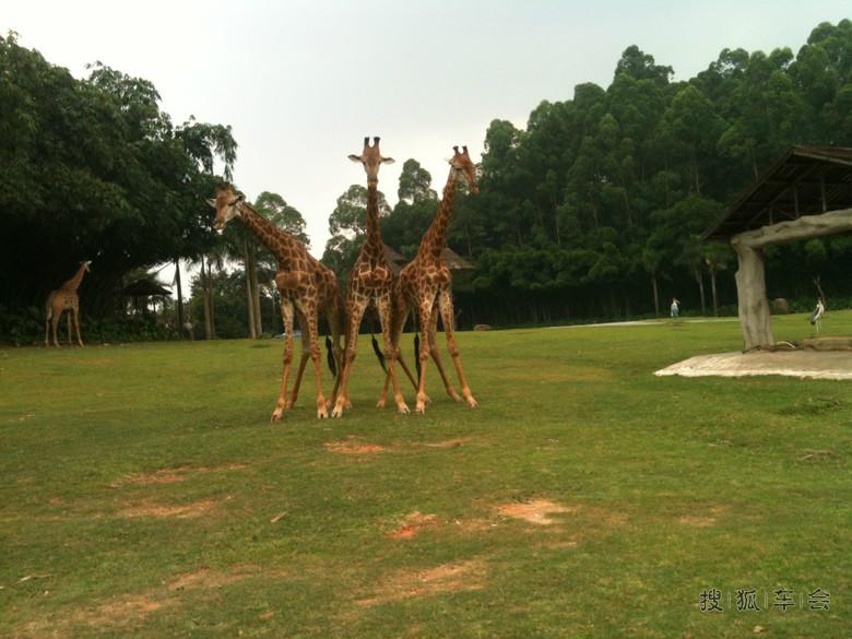 自驾从深圳―广州长隆野生动物园