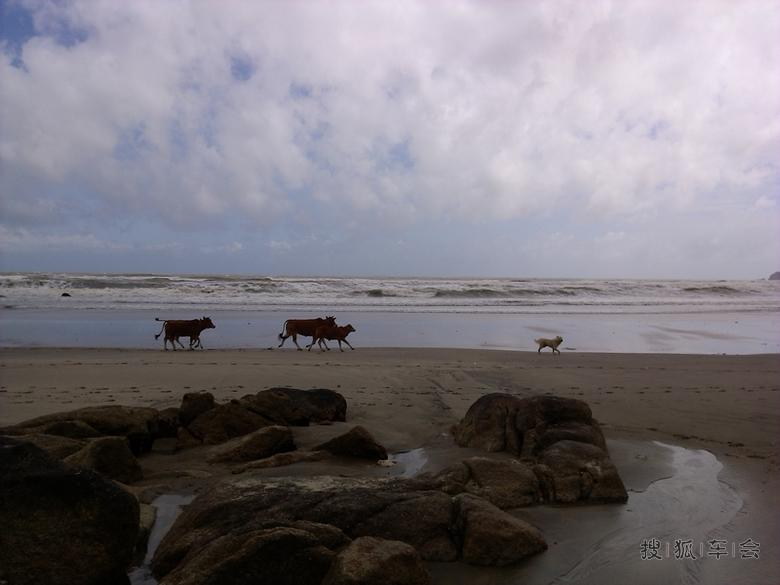浪漫荷包岛,与你分享它的沙滩礁石海浪森林山涧野牛