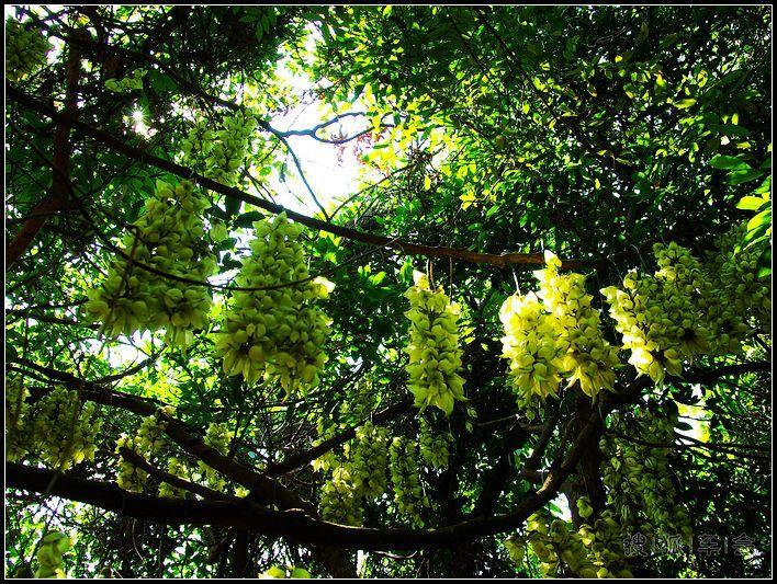 清溪赏景正当时——大王山森林公园赏花记