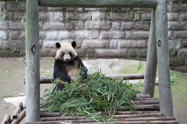 重庆动物园一日游(陪孕妇)以及勤劳二老的后花园
