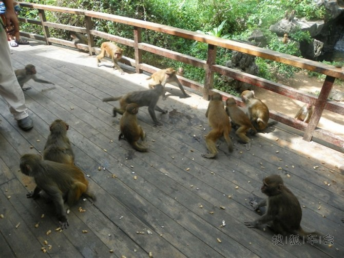 上岛了,首先看到的就是成群的猴子
