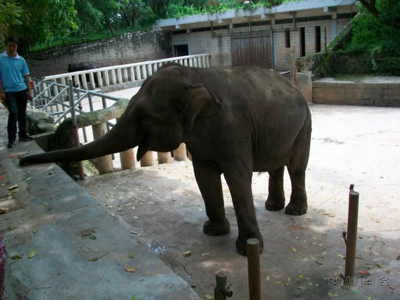 51深圳野生动物园自驾游