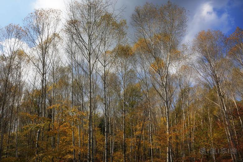 树林子 树叶子