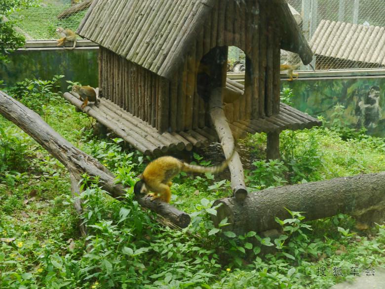 走进大自然动物世界——五一自驾小游南京红山森林园