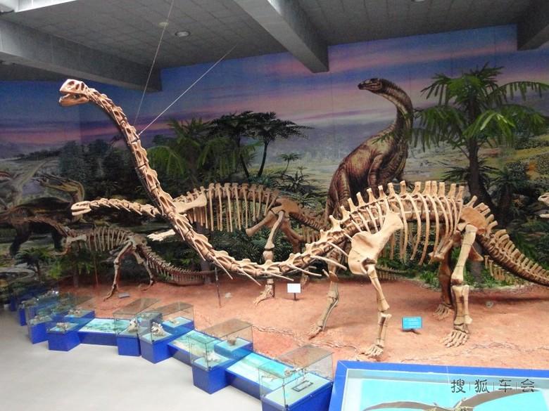 [天行小札]动物骨骼标本