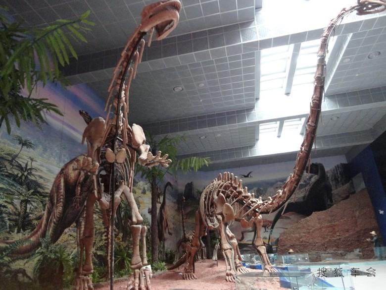 自从有了人类,也就有了各种动物们的存在。但是这些除了鹰外,其它的早已经是不存在了,恐龙见过吗,我们从来也没有看到过,地球千百年的变化,它们没有了生存的条件,以至于灭绝了,科考们只是找到它们的化石,才知道它们曾经存在过。这些骨骼标本再显了它曾经的雄姿。如今也只能在博物馆里欣赏,我们需要真化石去提醒我们对地球应尽的责任。